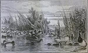 The Fowler In Ireland Or Notes On The Haunts And Any Habits Of Wildfowl seafowl including ...