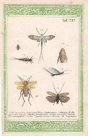Sieben Darstellungen auf einem Blatt. 1. Die: Eintagsfliege, Schabe -