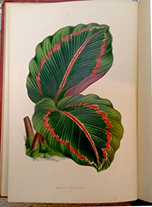 New and Rare Beautiful-Leaved Plants: containing Illustrations: Hibberd, Shirley.