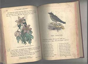 The Nursery, a Magazine for Youngest Readers, Volume 1: Seaverns, Fanny P.