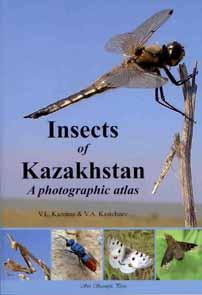 Insects of Kazakhstan: A photographic atlas: Kazenas, V.L.; Kastcheev,