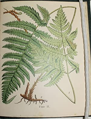 A Popular History of the British Ferns: Moore, T.
