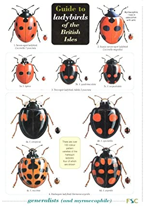 A Guide to Ladybirds of the British: Majerus, M. et