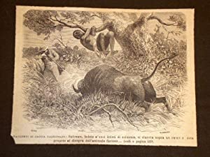 La Caccia al bufalo
