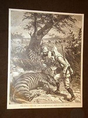 Africa centrale Caccia grossa Zebra