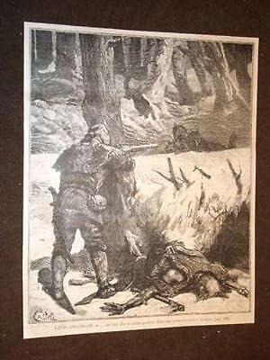 Caccia al lupo America artica