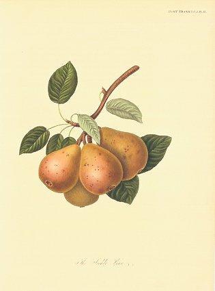 The Seckle Pear.: PEAR)