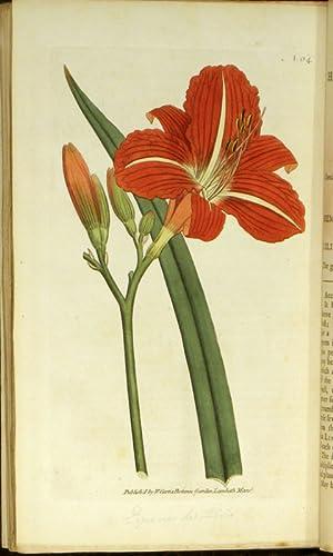 The Botanical Magazine; or Flower-Garden displayed.: Curtis, William. Sowerby,