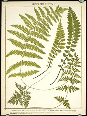 1. Marsh Buckler Fern. 2. Brittle Bladder Fern. 3. Mountain Bladder Fern. 4. Sea Spleenwort. 5. S...