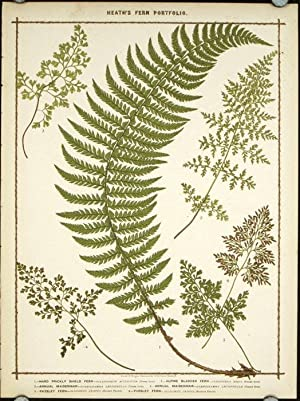1. Hard Prickly Shield Fern. 2. Alpine Bladder Fern. 3. Annual Maidenhair. 4. Annual Maidenhair. ...