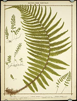 1. Male Fern. 2. Oblong Woodsia. 3. Oblong Woodsia. 4. Alpine Woodsia. 5. Tunbridge Filmy Fern. 6...