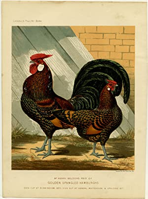 Mr. Henry Beldon's Pair of Golden Spangled Hamburghs. Cock Cup at Birmingham 1870, Hen Cup at Ken...