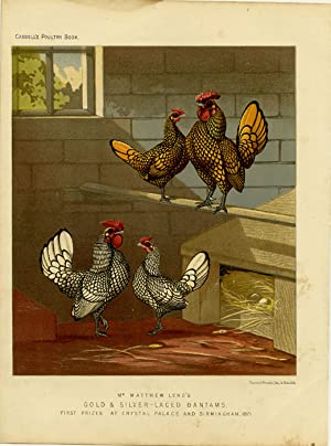 Mr. Matthew Leno's Gold & Silver-Laced Bantams, First Prizes at Crystal Palace and Birmingham, 1871.