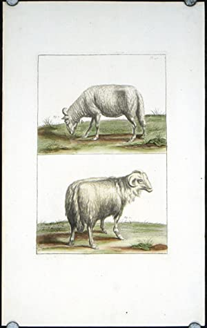 Untitled engraving: rams.
