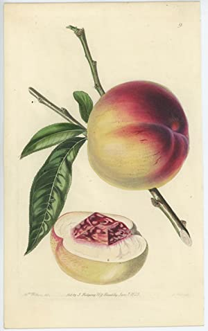 Catharine Peach.