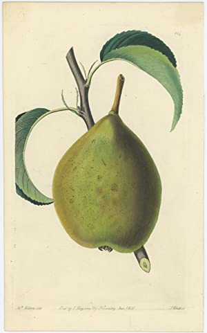 The Brown Beurre Pear.