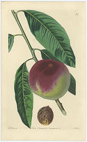 The Spring-Grove Peach.