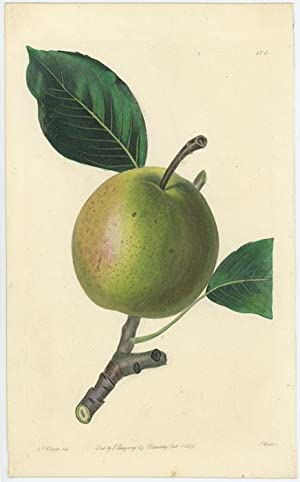 The Early Bergamot Pear.