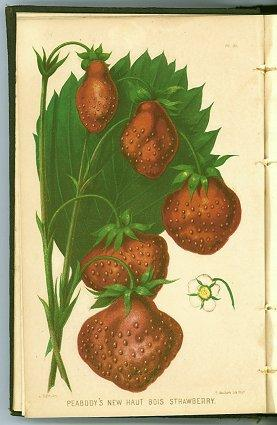 Report of the Commissioner of Patents for the Year 1856. Agriculture. CHROMOLITHOGRAPHIC PLATES O...