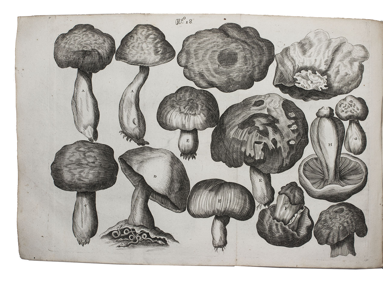 Theatrum fungorum, oft het tooneel der campernoelien: STERBEECK, Franciscus van.