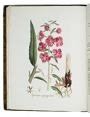 Flora Batava, afgebeeld door en van wegens: KOPS, Jan (with