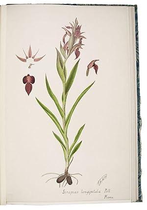 Iconographie des orchidées des environs de Paris.[Paris,]: CAMUS, Edmond Gustave.