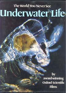 The World You Never See: UNDERWATER LIFE