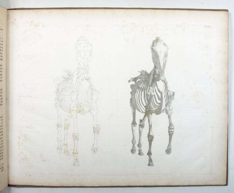 The Anatomy Of The Horse By Stubbs George London J Purser