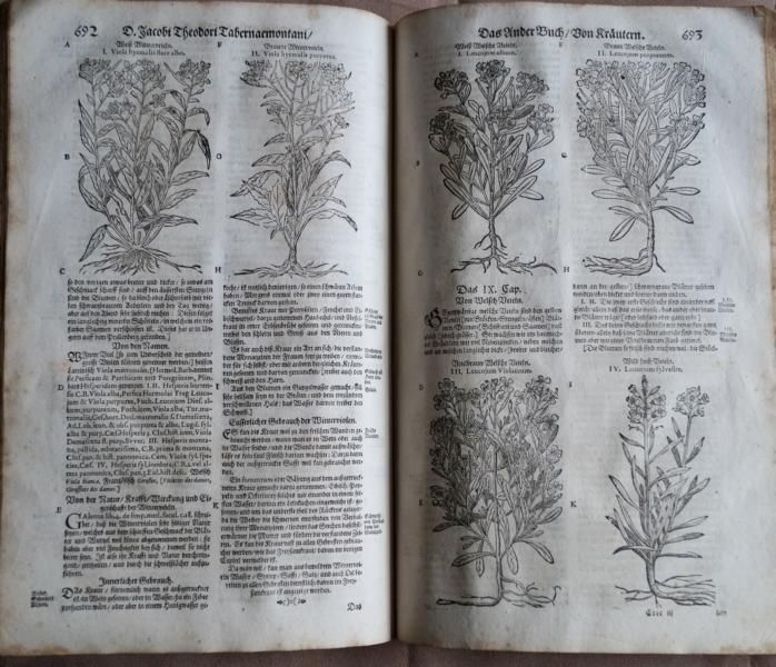 Neu vollkommen Kräuter-Buch mit schönen und künstlichen: Tabernaemontanus, Jacob Theodor:
