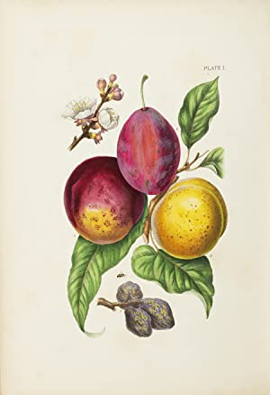 A TREATISE ON THE INSECT ENEMIES OF FRUIT AND FRUIT TREES, WITH NUMEROUS ILLUSTRATIONS DRAWN FROM...