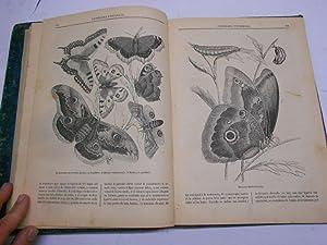 PANORAMA UNIVERSAL. Lecturas amenas e instructivas, tomo I y II, 1854-1855 (todo lo publicado).