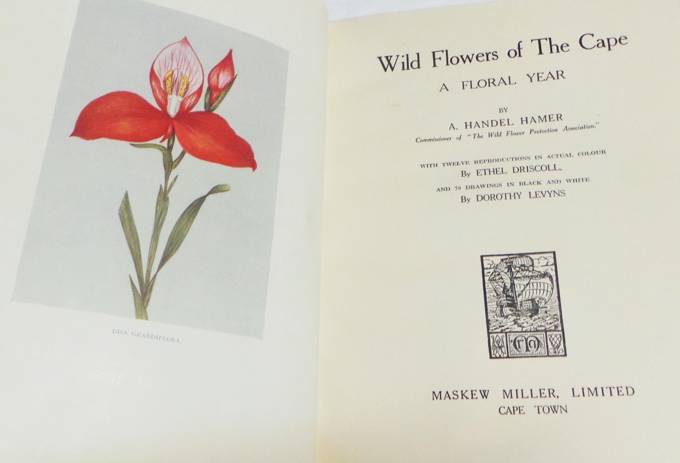 Wild Flowers Of The Cape First Edition Vellum Binding By Hamer A