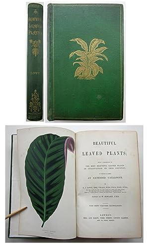 BEAUTIFUL LEAVED PLANTS; being a Description of: Lowe, E. J.