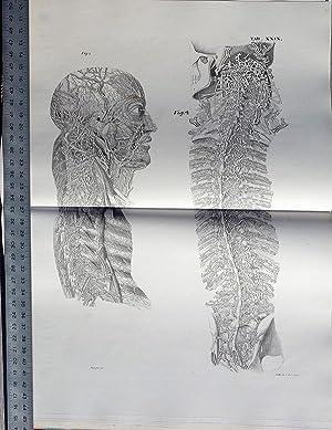 Planches anatomique du corps humain. Atlas: Antommarchi, Francesco; Mascagni,, Paolo
