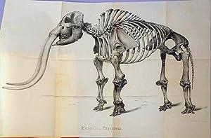 Description of a skeleton of the Mastodon Giganteus of North America: Warren, John C.
