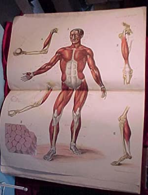 Atlas of human anatomy and physiology (atlas only; all published?). 8 large folio ...