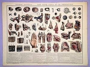 Histoire naturelle des cinq sens et la phonation. Oblong folio. Hand-colored. 21x28.5in: ...