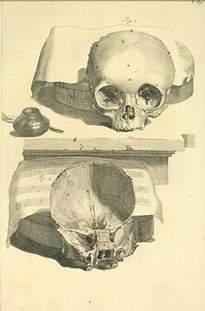 Plate 89 (skulls & music) from Anatomia humani corporis. 522 x 358 mm. First edition: Bidloo, ...