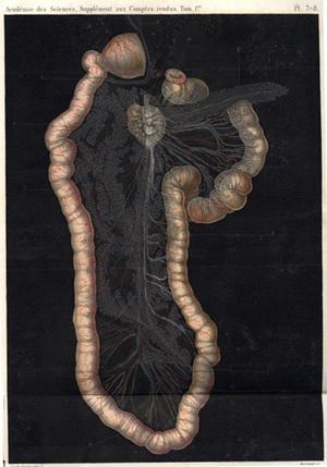 Memoire sur le pancreas et sur le role du suc pancreatique dans les phenomenes digestifs.: Bernard,...