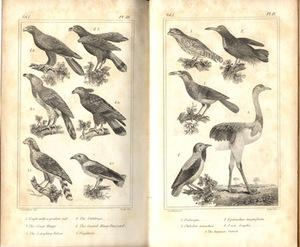 The animal kingdom arranged in conformity with its organization . . . translated by H. M'...