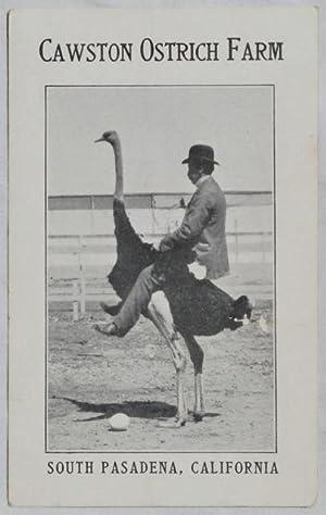 Cawston Ostrich Farm.: Cawston Ostrich Farm.