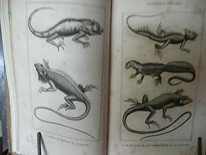 ALBUM De Tortugas, Lagartos, Batracianos, Serpientes, Peces y Cetaceos Para Ilustracion Del ...