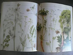 LA NUEVA ERA DE LAS HIERBAS. Guía Práctica de Herboristería: Richard Mabey