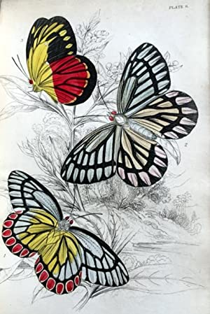 The Natural History of Foreign Butterflies -: Duncan, James -