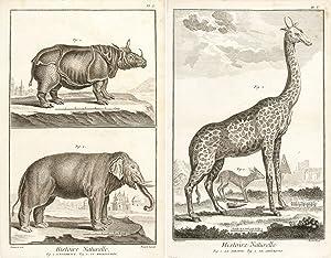 Histoire Naturelle, Regne Animal (The Animal Kingdom): Diderot, Denis.
