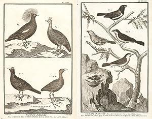 Histoire Naturelle, Oiseaux (Ornithology) Encyclopédie, ou dictionnaire: Diderot, Denis.