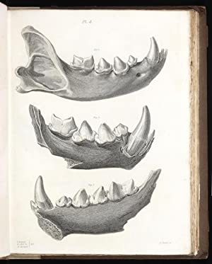 Reliquiae Diluvianae; or, Observations on the Organic: BUCKLAND, William