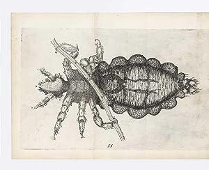 Micrographia Curiosa sive Rerum minutissimarum Observationes, quae: BUONANNI (or BONANNI),
