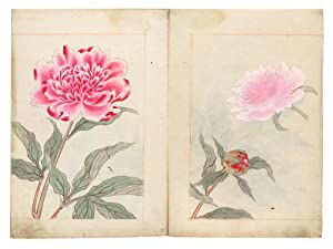 Illustrated botanical manuscript album on paper, the finely accomplished botanical drawings for a...
