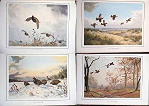 Game Birds of the British Isles: Harrison J C (Illustrator) and McKelvie Colin Laurie (Text By)